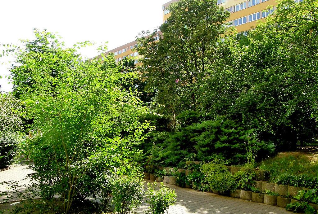 zielona okolica to duży atut tego mieszkania na sprzedaż Wrocław Krzyki