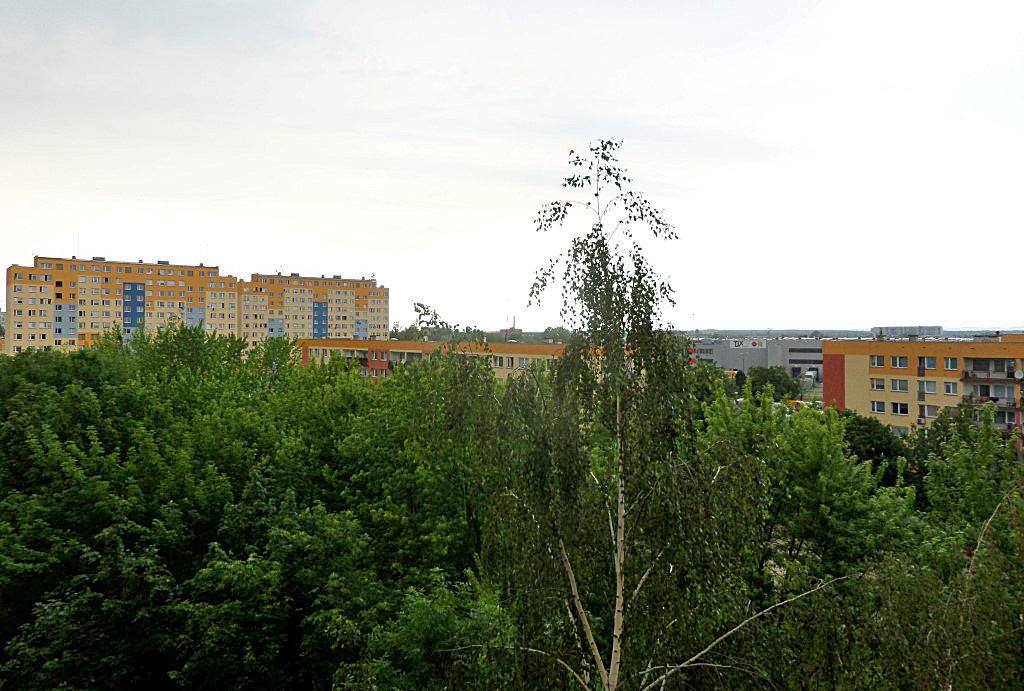 widok z okien na zieleń z mieszkania do wynajęcia Wrocław Psie Pole